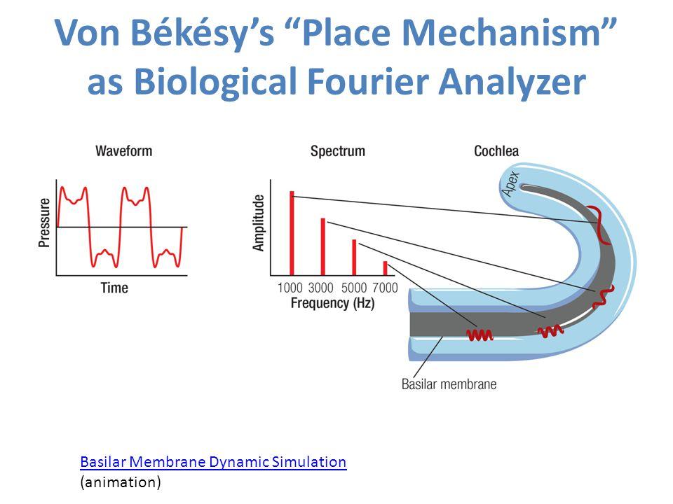 "Von Békésy's ""Place Mechanism"" as Biological Fourier Analyzer Basilar Membrane Dynamic Simulation Basilar Membrane Dynamic Simulation (animation)"