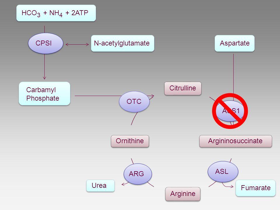 Citrulline Carbamyl Phosphate N-acetylglutamateCPSI HCO 3 + NH 4 + 2ATP Argininosuccinate ASS1 Aspartate Arginine Fumarate ASL Ornithine Urea ARG OTC