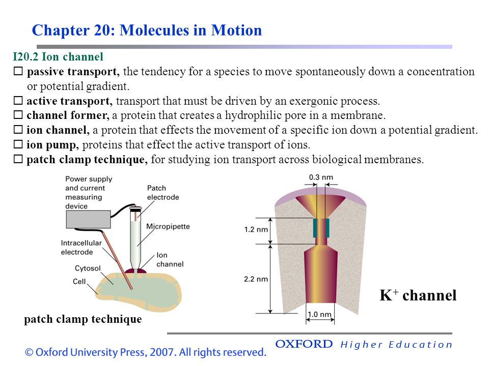 Chapter 20: Molecules in Motion I20.2 Ion channel  passive transport, the tendency for a species to move spontaneously down a concentration or potential gradient.