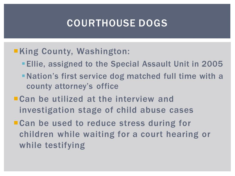  King County, Washington:  Ellie, assigned to the Special Assault Unit in 2005  Nation's first service dog matched full time with a county attorney's office  Can be utilized at the interview and investigation stage of child abuse cases  Can be used to reduce stress during for children while waiting for a court hearing or while testifying COURTHOUSE DOGS