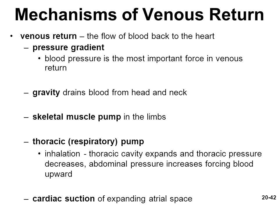 20-42 Mechanisms of Venous Return venous return – the flow of blood back to the heart –pressure gradient blood pressure is the most important force in venous return –gravity drains blood from head and neck –skeletal muscle pump in the limbs –thoracic (respiratory) pump inhalation - thoracic cavity expands and thoracic pressure decreases, abdominal pressure increases forcing blood upward –cardiac suction of expanding atrial space