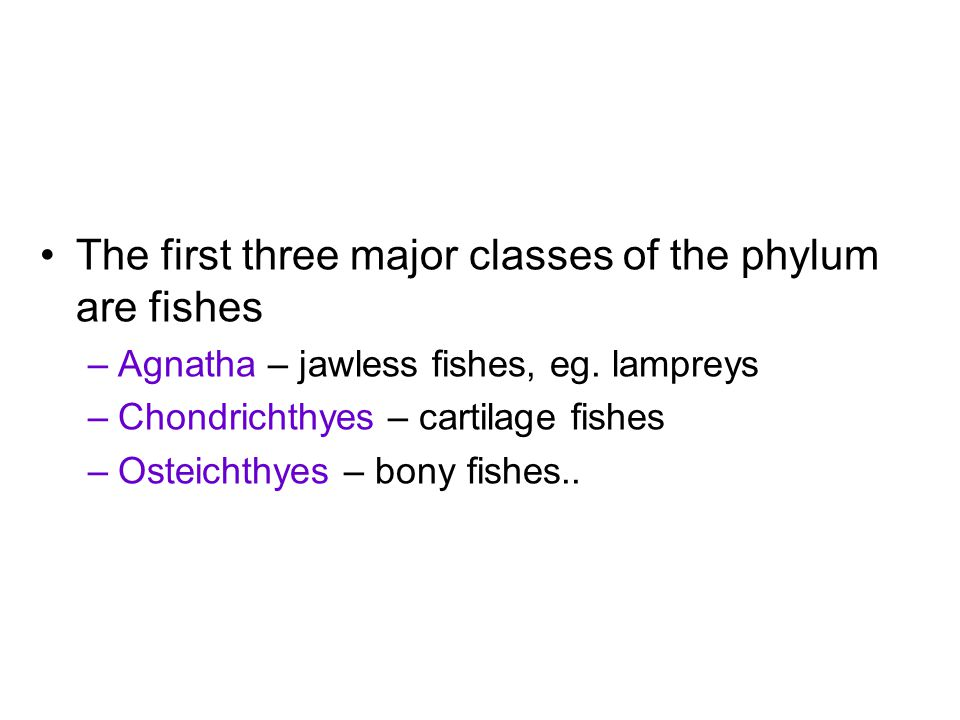 The first three major classes of the phylum are fishes –Agnatha – jawless fishes, eg.