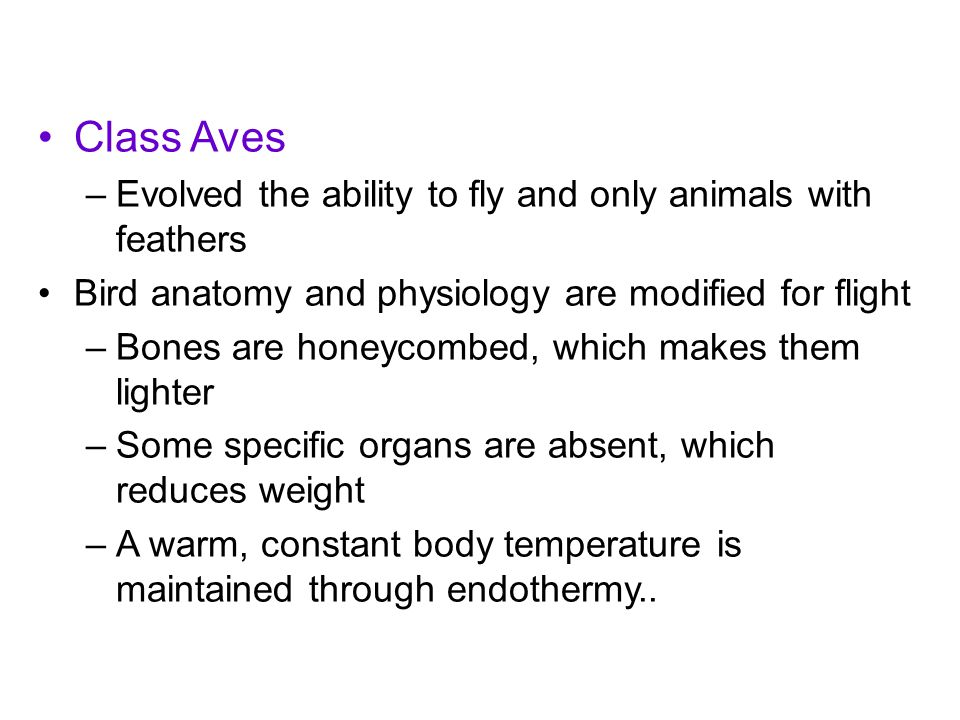 Class Aves –Evolved the ability to fly and only animals with feathers Bird anatomy and physiology are modified for flight –Bones are honeycombed, whic