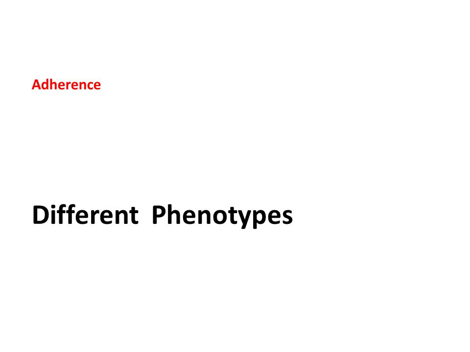 Adherence Different Phenotypes