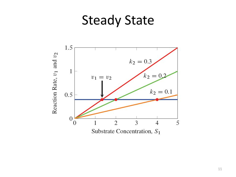 11 Steady State