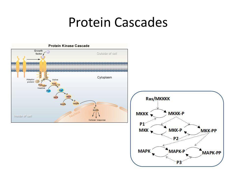 Protein Cascades