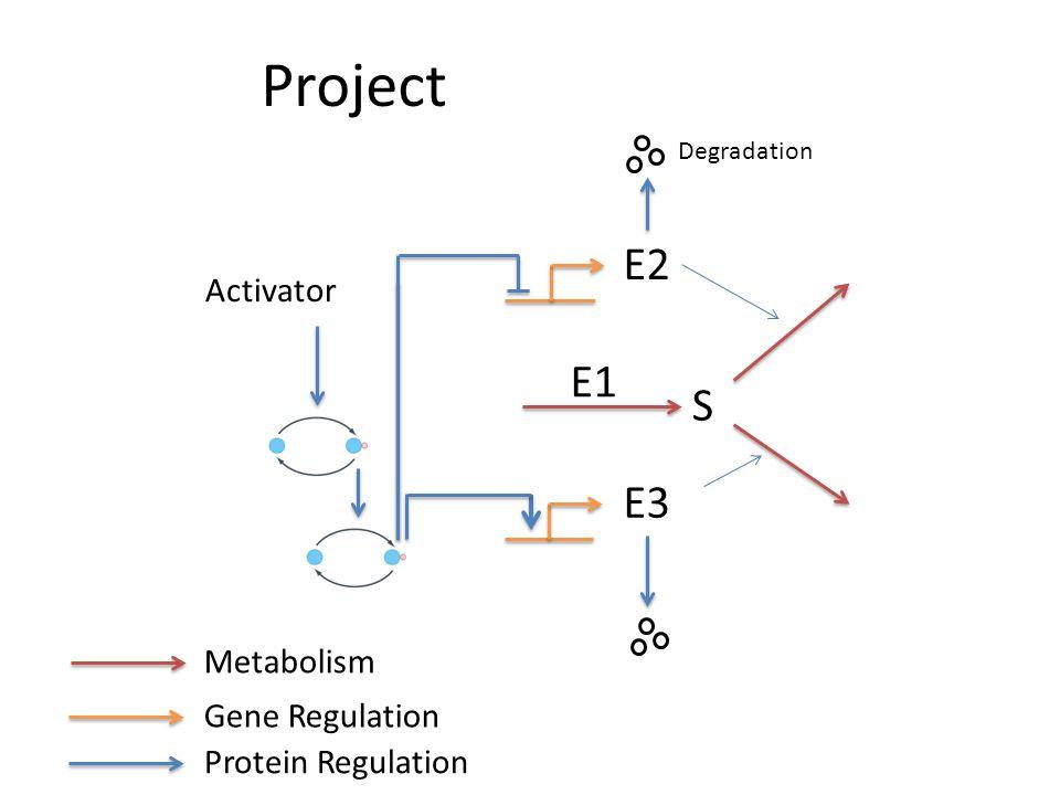 Project S E2 E3 E1 Activator Degradation Metabolism Gene Regulation Protein Regulation