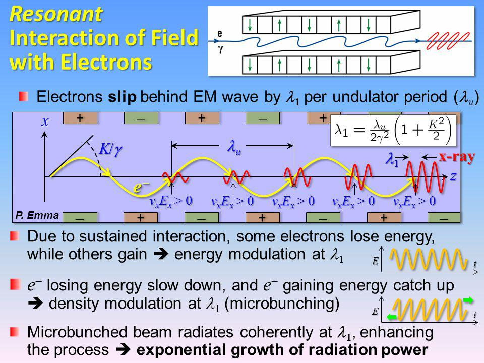 z x Due to sustained interaction, some electrons lose energy, while others gain  energy modulation at 1 e  losing energy slow down, and e  gaining energy catch up  density modulation at 1 (microbunching) Microbunched beam radiates coherently at 1, enhancing the process  exponential growth of radiation power u 1x-ray Electrons slip behind EM wave by 1 per undulator period ( u ) ++  ++  ++   ++  ++  ++ K/K/K/K/ v x E x > 0 ++  Resonant Interaction of Field with Electrons E t E t v x E x > 0 P.