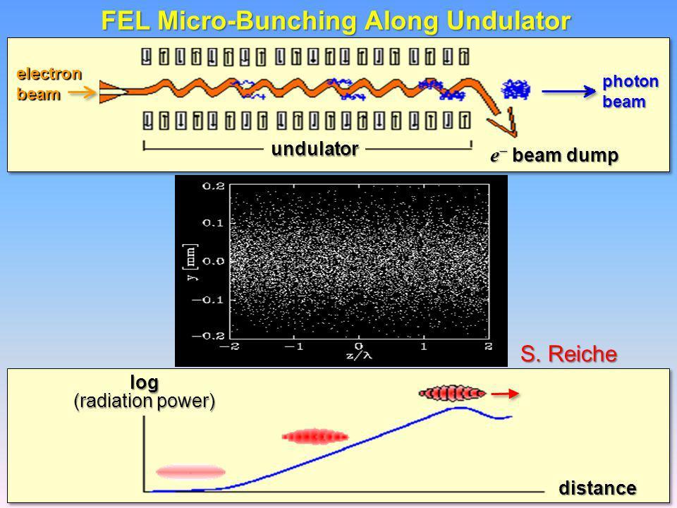 FEL Micro-Bunching Along Undulator S.