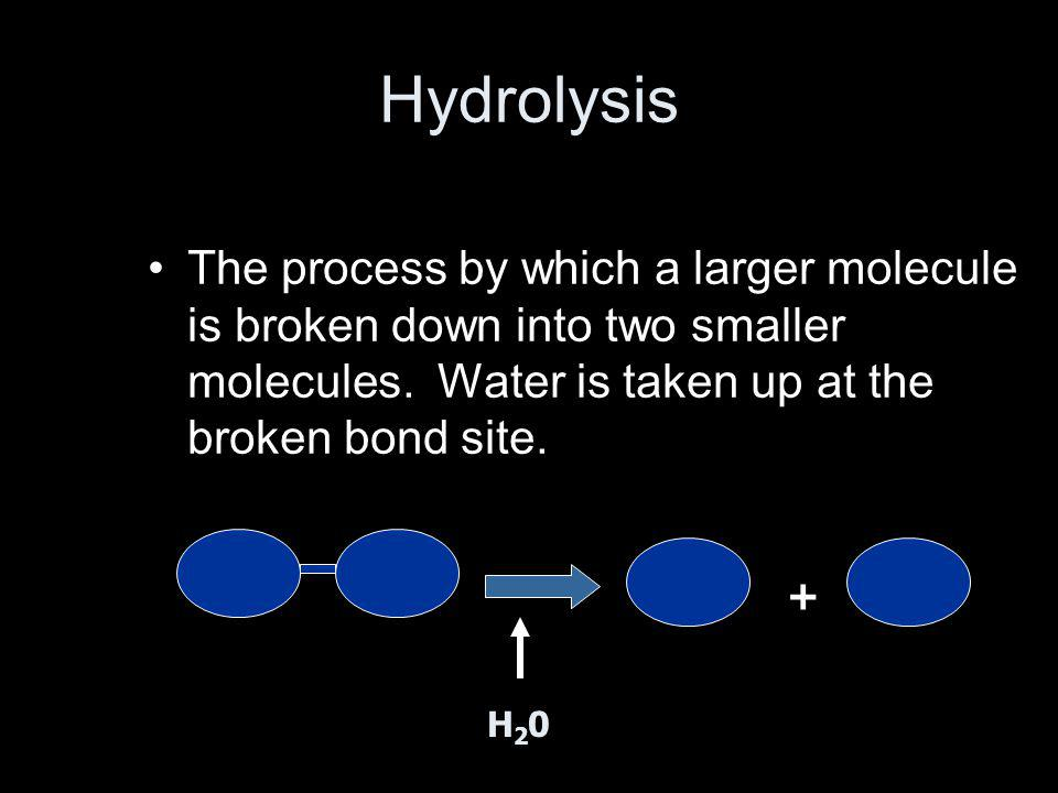 Hydrolysis The process by which a larger molecule is broken down into two smaller molecules. Water is taken up at the broken bond site. + H20H20