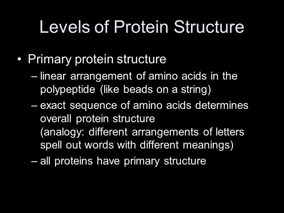 Levels of Protein Structure Primary protein structure –linear arrangement of amino acids in the polypeptide (like beads on a string) –exact sequence o