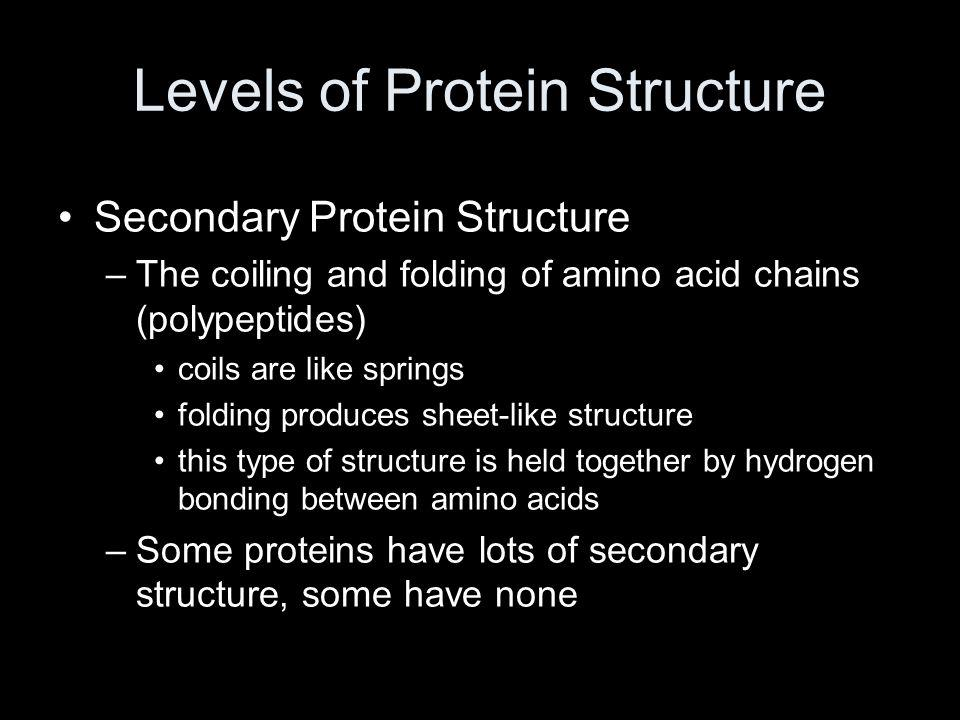 Levels of Protein Structure Secondary Protein Structure –The coiling and folding of amino acid chains (polypeptides) coils are like springs folding pr