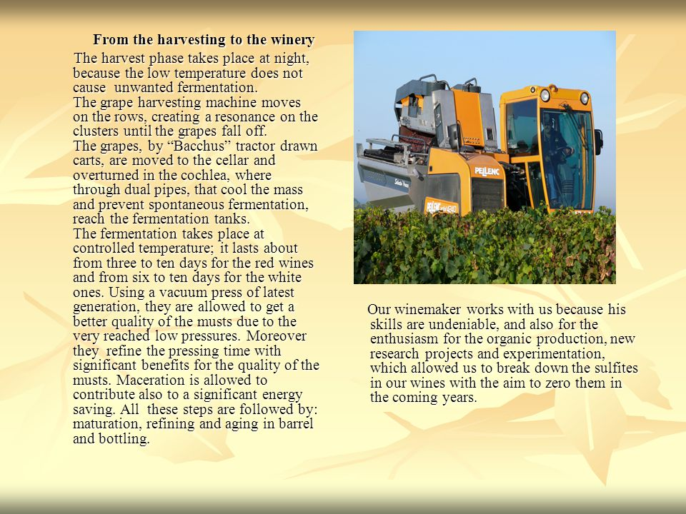 From the harvesting to the winery From the harvesting to the winery The harvest phase takes place at night, because the low temperature does not cause