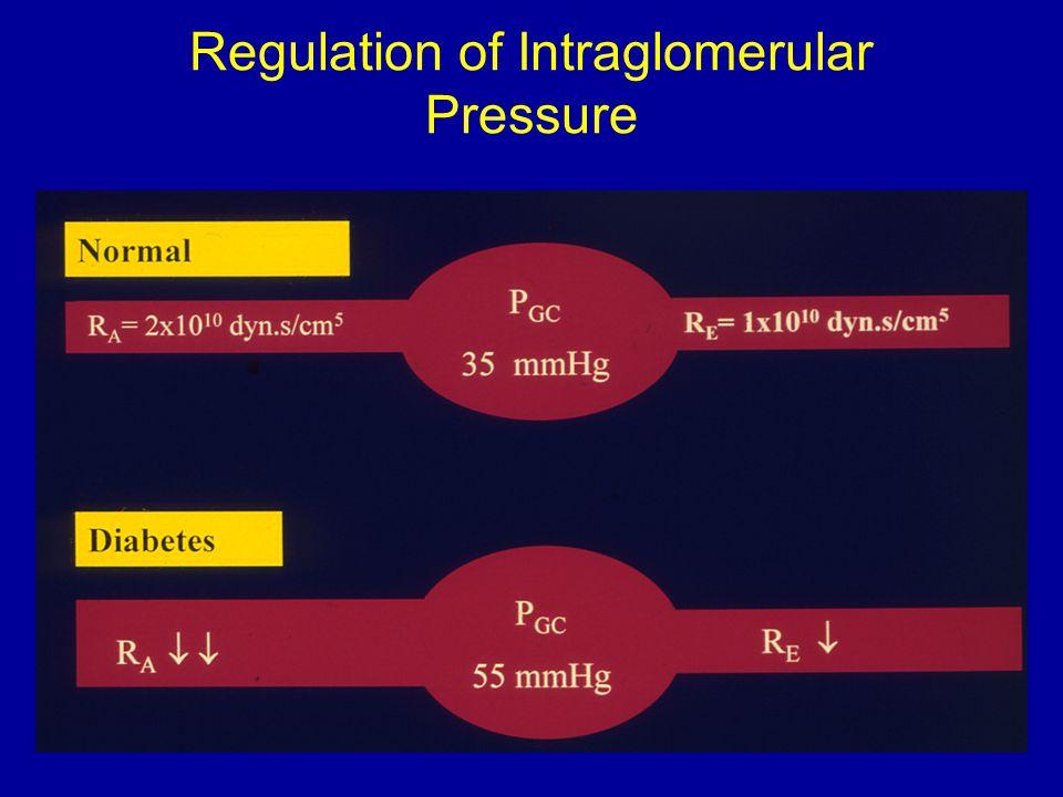 Regulation of Intraglomerular Pressure