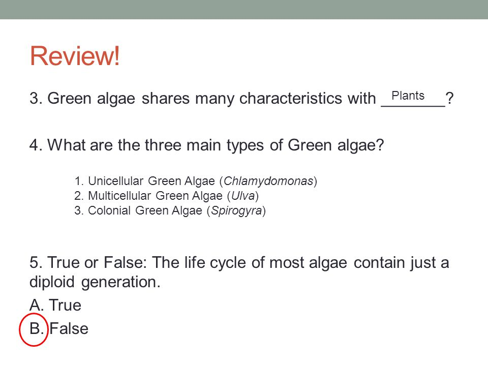Review! 3. Green algae shares many characteristics with _______? 4. What are the three main types of Green algae? 5. True or False: The life cycle of