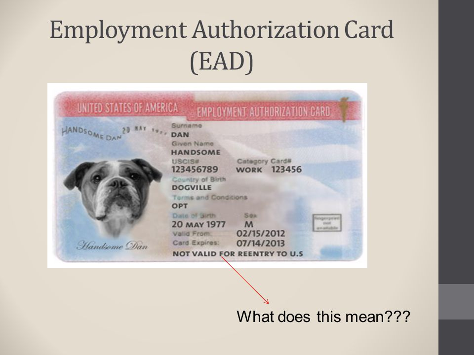 Employment Authorization Card (EAD) What does this mean???