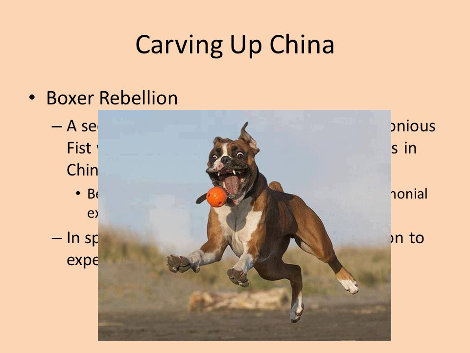 Carving Up China Boxer Rebellion – A secret Society called Righteous and Harmonious Fist was formed to try and combat foreigners in China Became known as Boxers because of their ceremonial exercises that resembled shadowboxing – In spring of 1900 the Boxers began a rebellion to expel foreigners