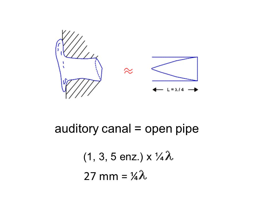 auditory canal = open pipe (1, 3, 5 enz.) x ¼ 27 mm = ¼