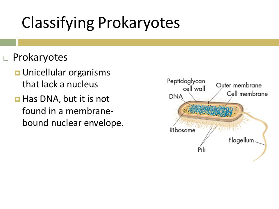  Prokaryotes are classified as Bacteria or Archaea  Two of the three domains of life.