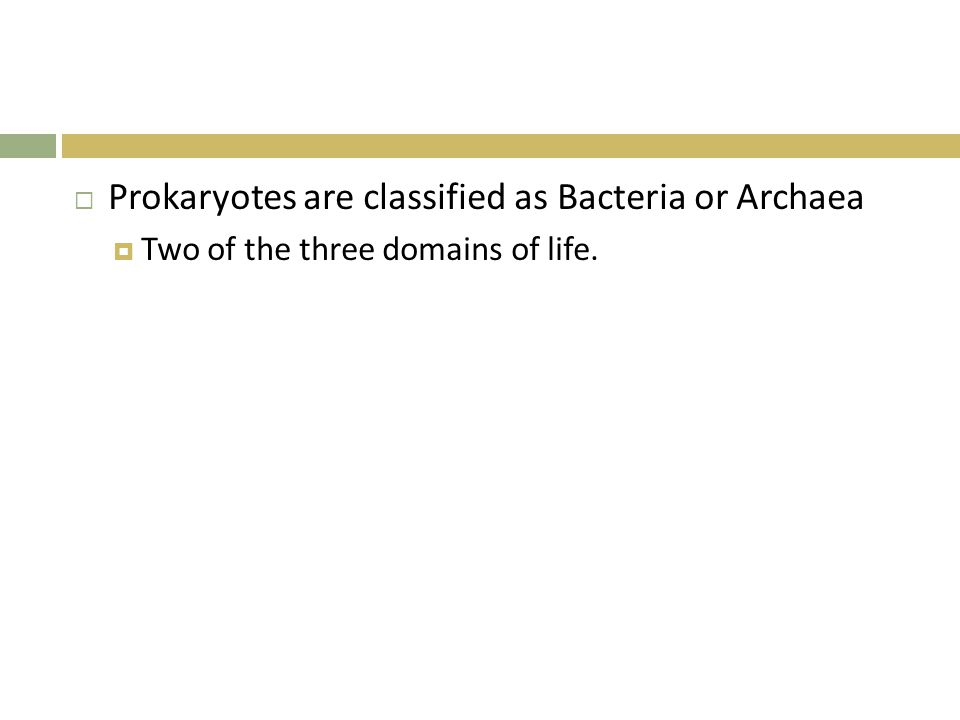 Bacteria  Larger of the two groups  Do not agree exactly how many phyla  Live almost everywhere.