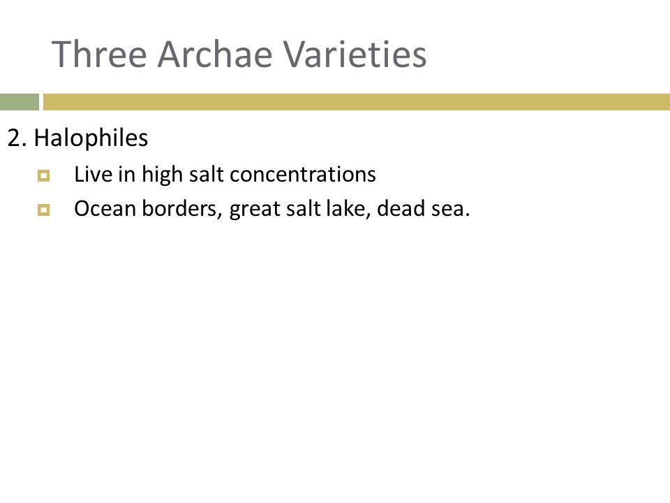 Three Archae Varieties 3.