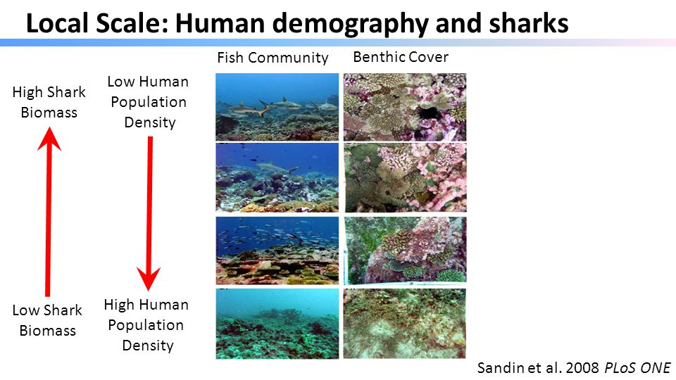 Sandin et al. 2008 PLoS ONE Low Human Population Density Benthic Cover Fish Community Local Scale: Human demography and sharks High Human Population D