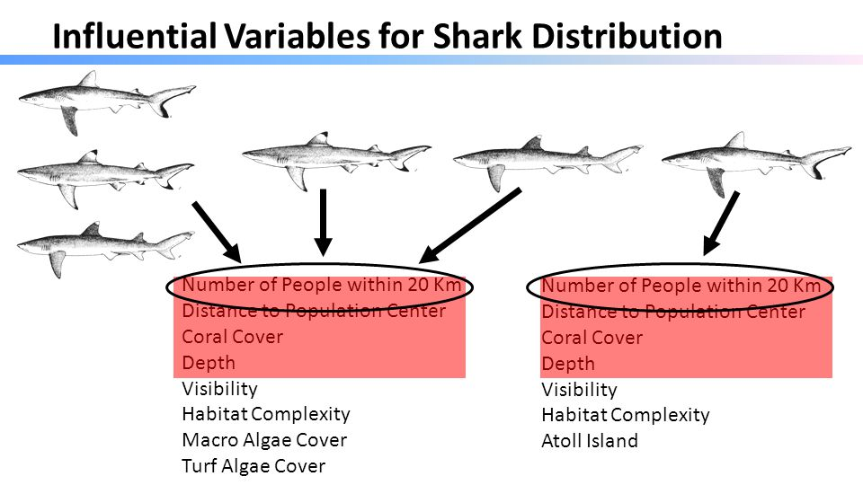 Influential Variables for Shark Distribution Number of People within 20 Km Distance to Population Center Coral Cover Depth Visibility Habitat Complexity Macro Algae Cover Turf Algae Cover Number of People within 20 Km Distance to Population Center Coral Cover Depth Visibility Habitat Complexity Atoll Island