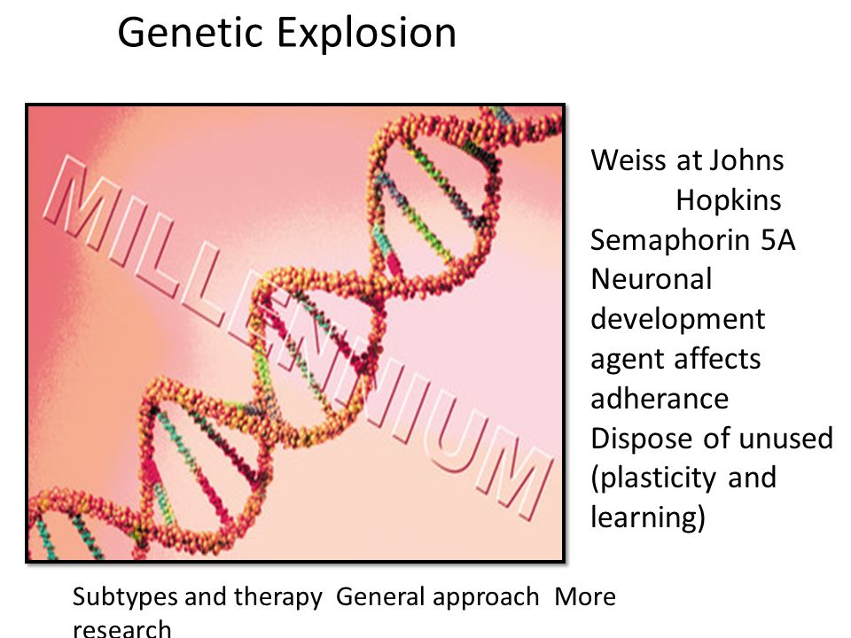 Genetic Explosion Weiss at Johns Hopkins Semaphorin 5A Neuronal development agent affects adherance Dispose of unused (plasticity and learning) Subtypes and therapy General approach More research
