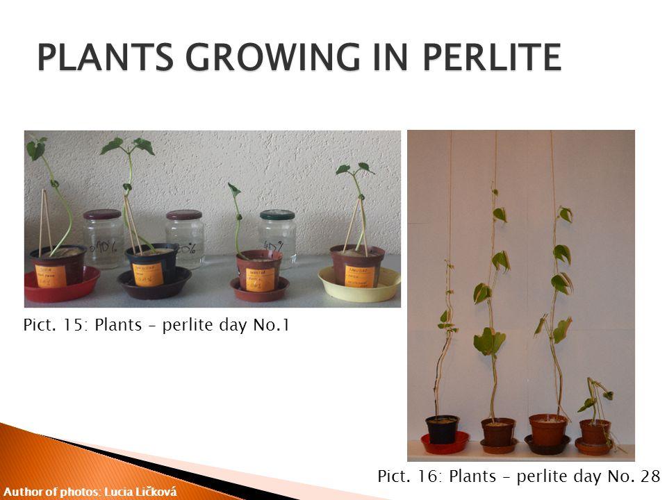 Pict. 15: Plants – perlite day No.1 Pict. 16: Plants – perlite day No.