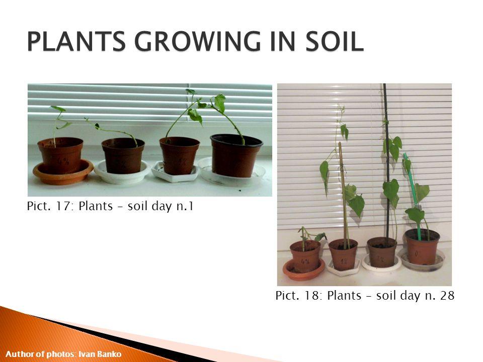 Pict. 17: Plants – soil day n.1 Pict. 18: Plants – soil day n.