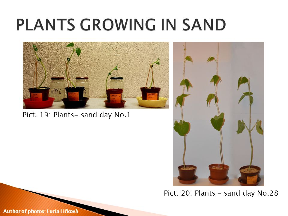 Pict. 19: Plants- sand day No.1 Pict.
