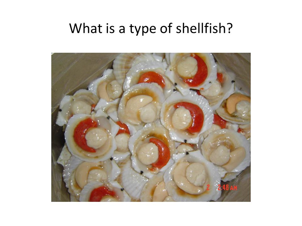What is a type of shellfish