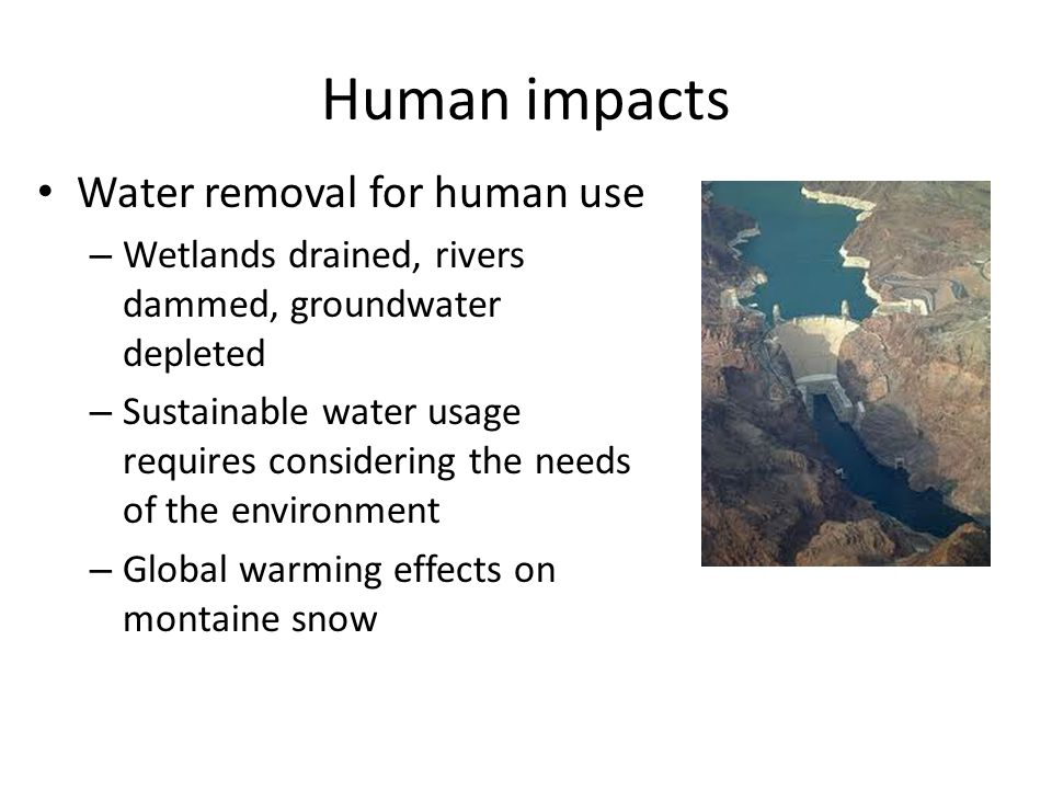 Human impacts Water removal for human use – Wetlands drained, rivers dammed, groundwater depleted – Sustainable water usage requires considering the n
