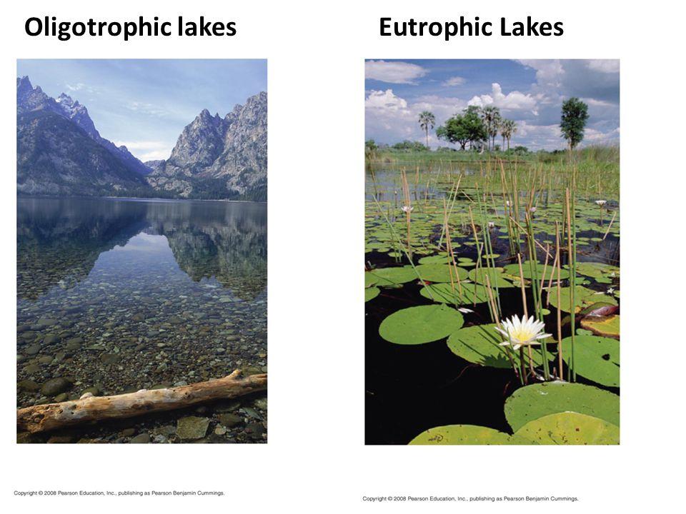 Lakes Oligotrophic lakes Eutrophic Lakes