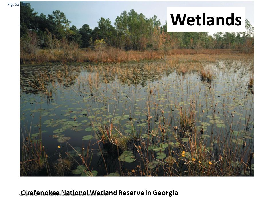 Fig. 52-18c Okefenokee National Wetland Reserve in Georgia Wetlands