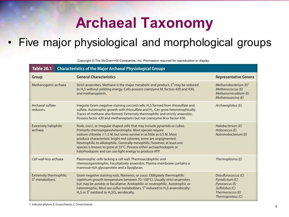 Archaeal Taxonomy Five major physiological and morphological groups 4
