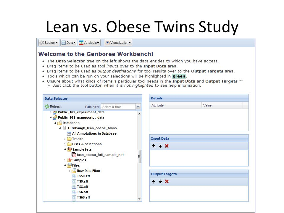 Lean vs. Obese Twins Study