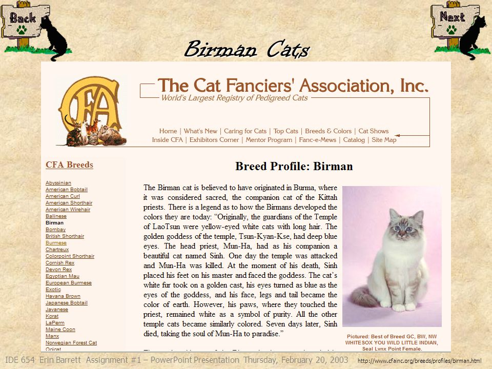IDE 654 Erin Barrett Assignment #1 – PowerPoint Presentation Thursday, February 20, 2003 The Birman cat is believed to have originated in Burma, where it was considered sacred, the companion cat of the Kittah priests.