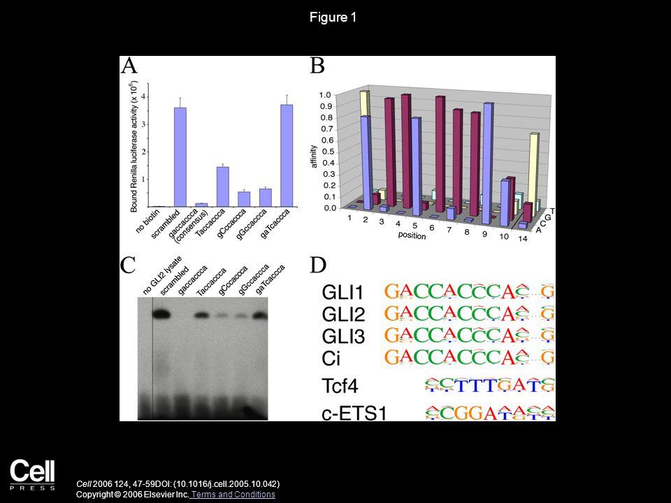 Figure 1 Cell 2006 124, 47-59DOI: (10.1016/j.cell.2005.10.042) Copyright © 2006 Elsevier Inc.