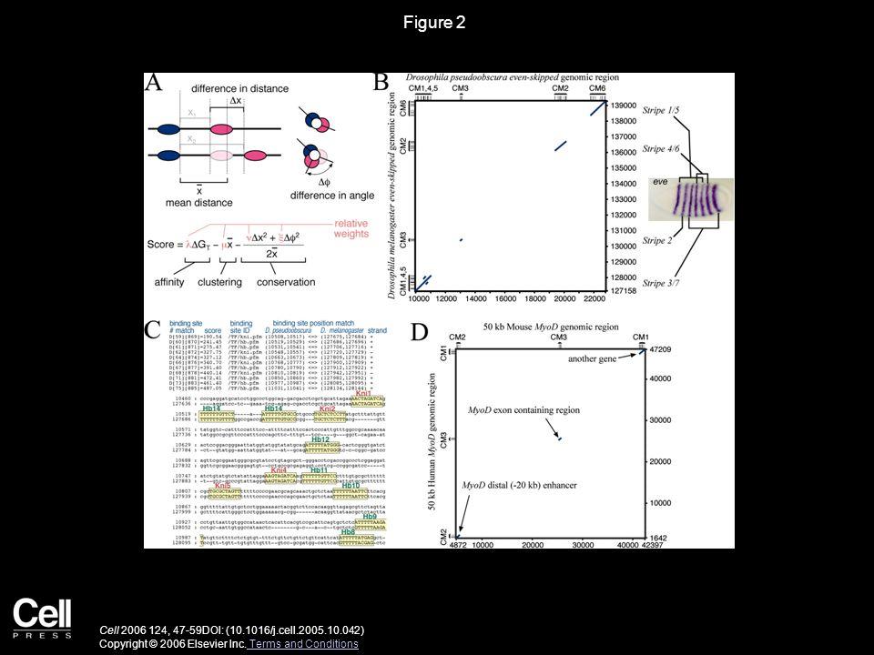 Figure 2 Cell 2006 124, 47-59DOI: (10.1016/j.cell.2005.10.042) Copyright © 2006 Elsevier Inc. Terms and Conditions Terms and Conditions