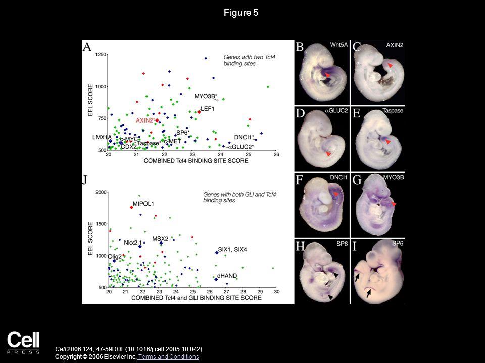 Figure 5 Cell 2006 124, 47-59DOI: (10.1016/j.cell.2005.10.042) Copyright © 2006 Elsevier Inc. Terms and Conditions Terms and Conditions
