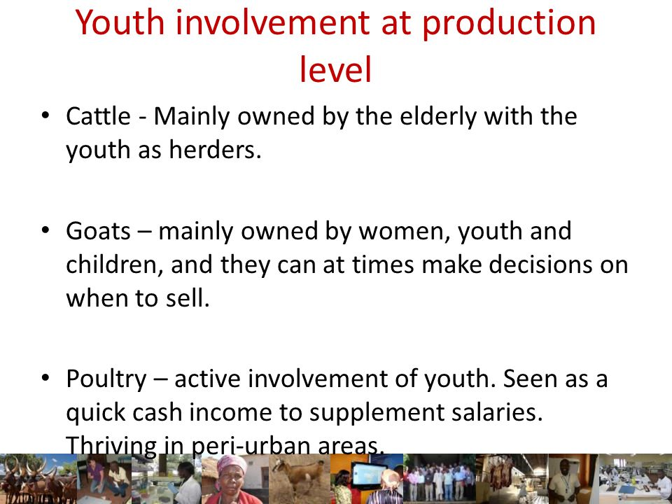 Youth involvement at production level Cattle - Mainly owned by the elderly with the youth as herders.