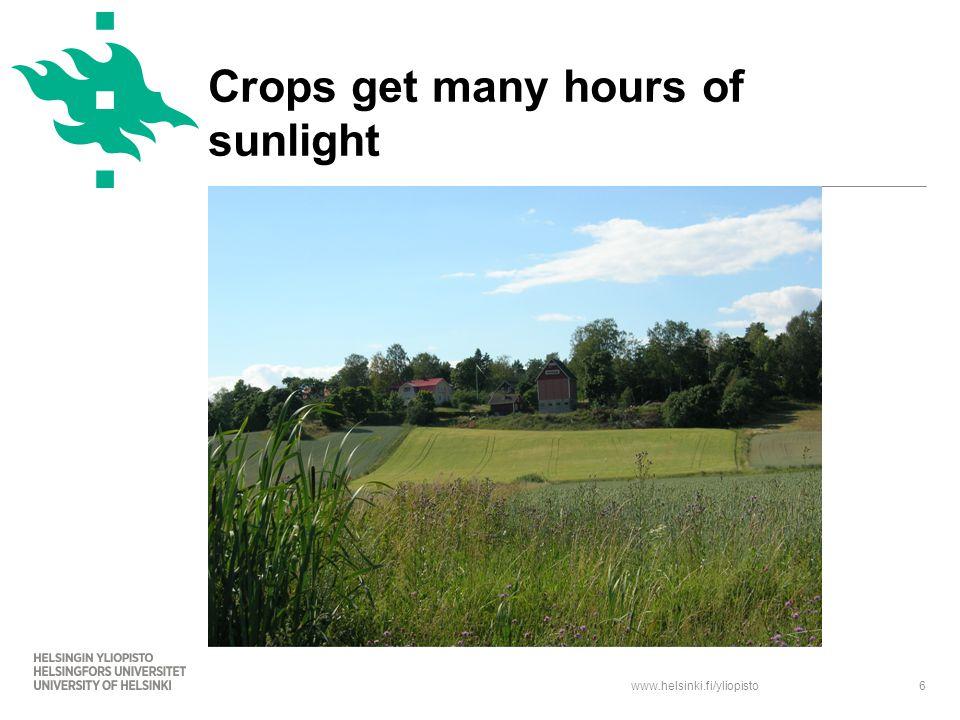 www.helsinki.fi/yliopisto6 Crops get many hours of sunlight