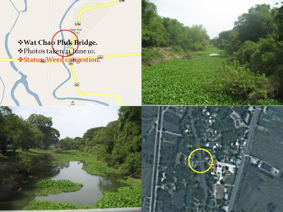  Wat Chao Pluk Bridge.  Photos taken 21 June 10.  Status: Weed congestion.