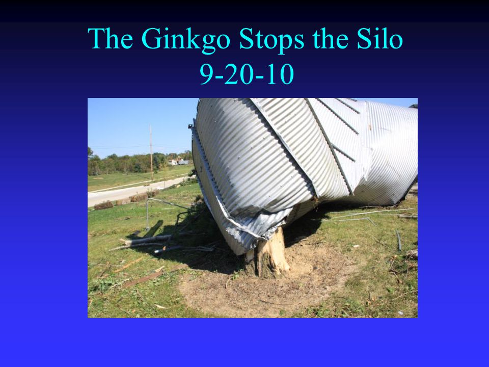 The Ginkgo Stops the Silo 9-20-10