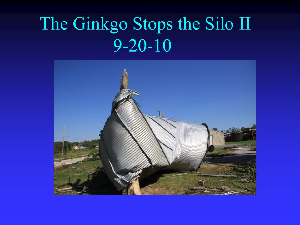 The Ginkgo Stops the Silo II 9-20-10