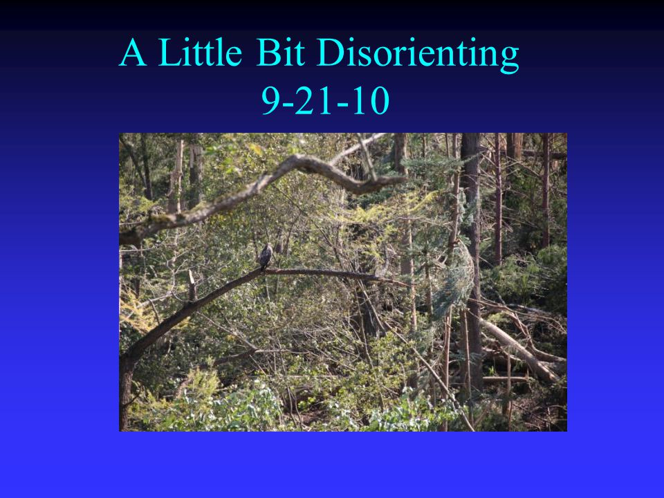 A Little Bit Disorienting 9-21-10