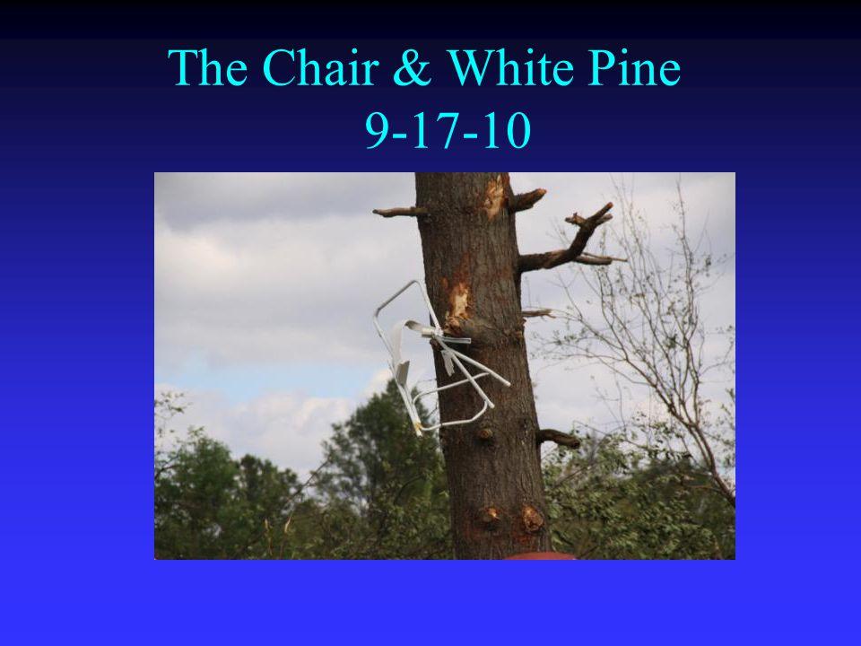 The Chair & White Pine 9-17-10