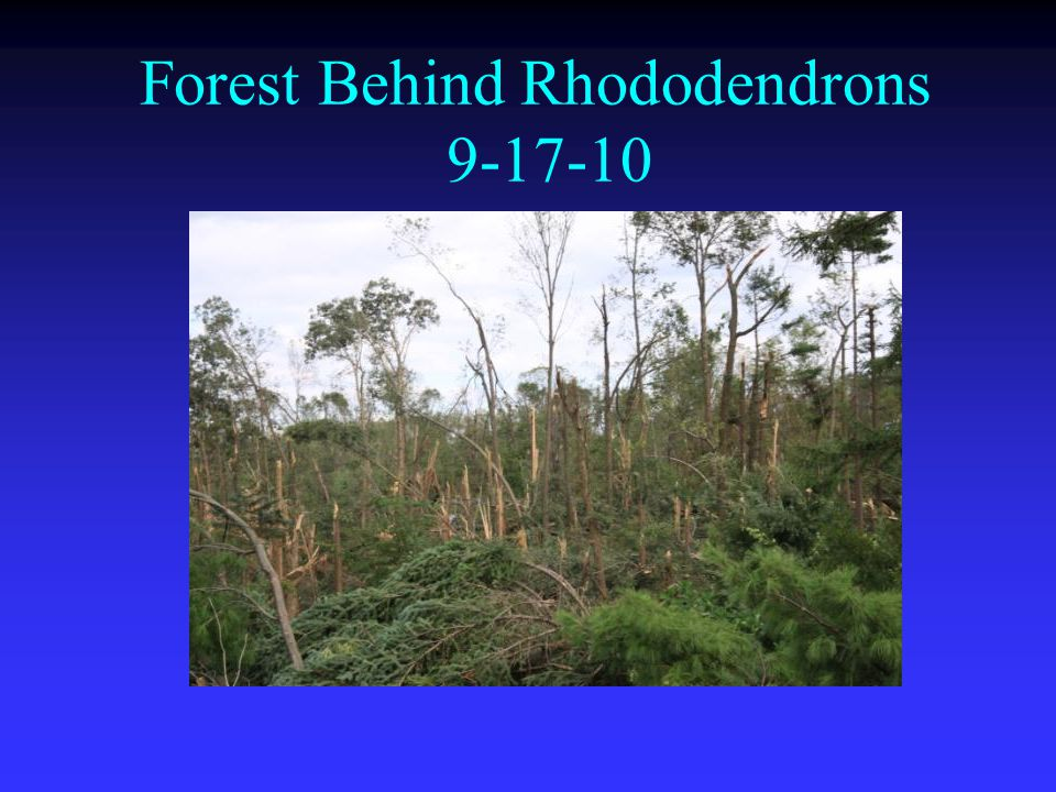 Forest Behind Rhododendrons 9-17-10