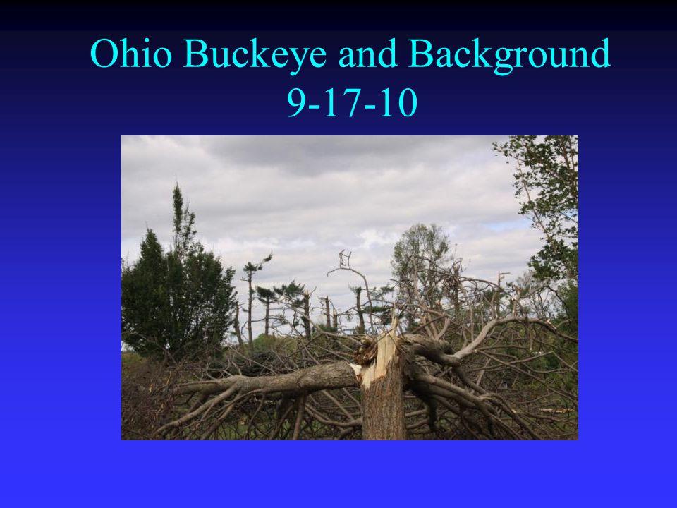 Ohio Buckeye and Background 9-17-10
